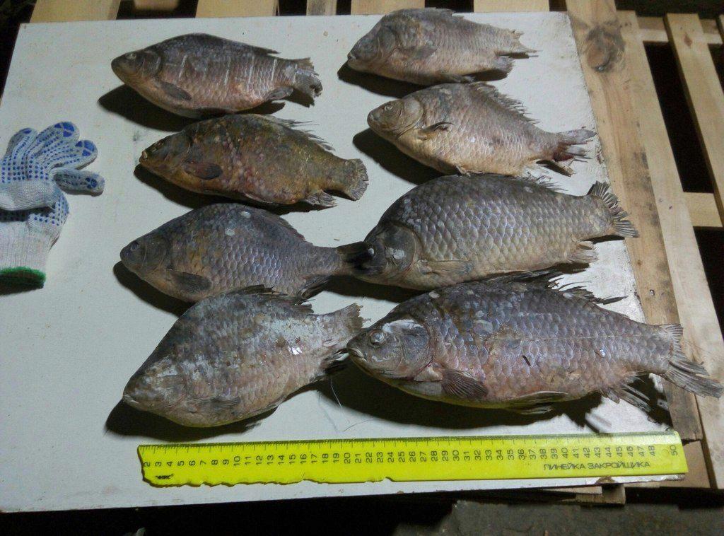 группа рыбалка нижнего новгорода